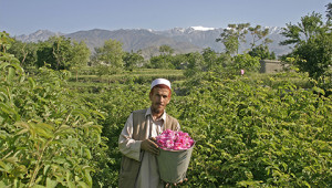 Dr.Hauschka Huile essentielle de rose d'Afghanistan