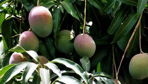 Dr.Hauschka Beurre de mangue d'Inde