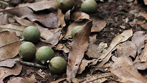 Dr.Hauschka Noix de Macadamia du Kenya
