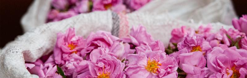 Dr.Hauschka Valeurs : Roses de Damas