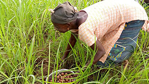 Dr. Hauschka Beurre de karité du Burkina Faso