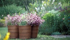 Dr.Hauschka Jardins de plantes médicinales