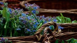 Dr. Hauschka Lexicon van heilzame planten
